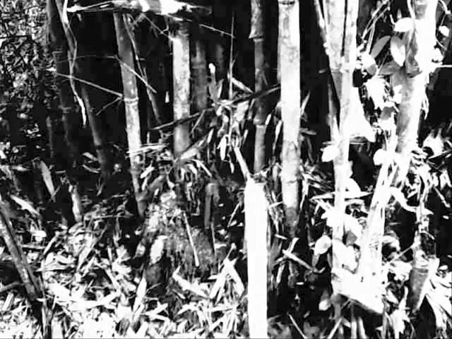 Cactus River (Khong Lang Nam) / Apichatpong Weerasethakul