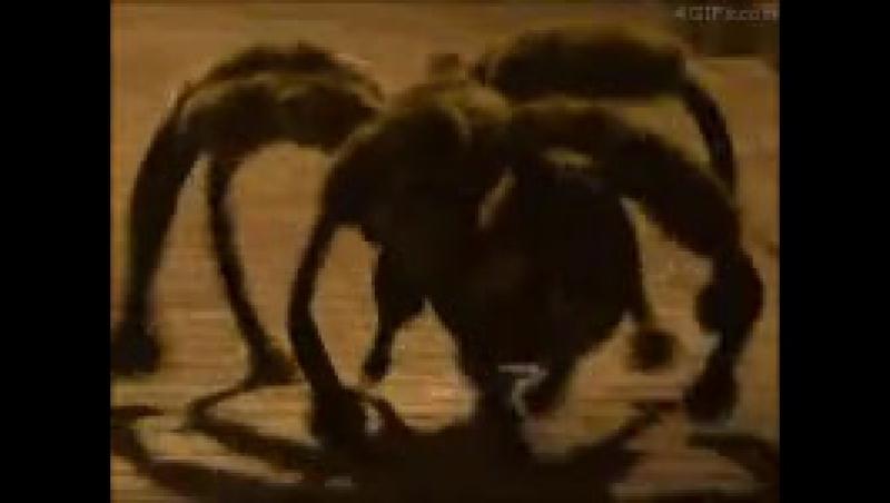 Атака собаки-паука