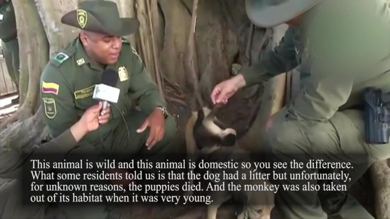 哥伦比亚一只狗收养了一只猴子