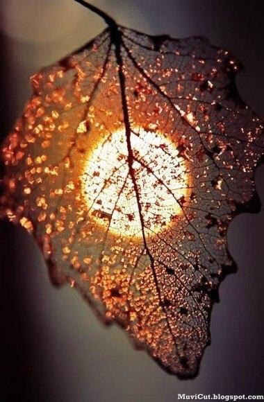 ....приходит сентябрь, И будет тревожно кружиться оторванный лист, Он в ветре прохладном немного продрог и озяб, Но что тут поделать? Природы осенней каприз... H8wnozedtt0