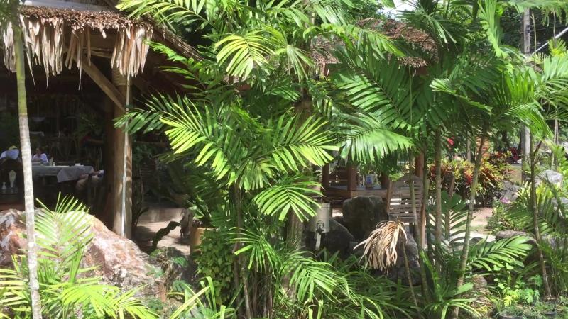 Остров Яо Ной. Небольшой ресторанчик
