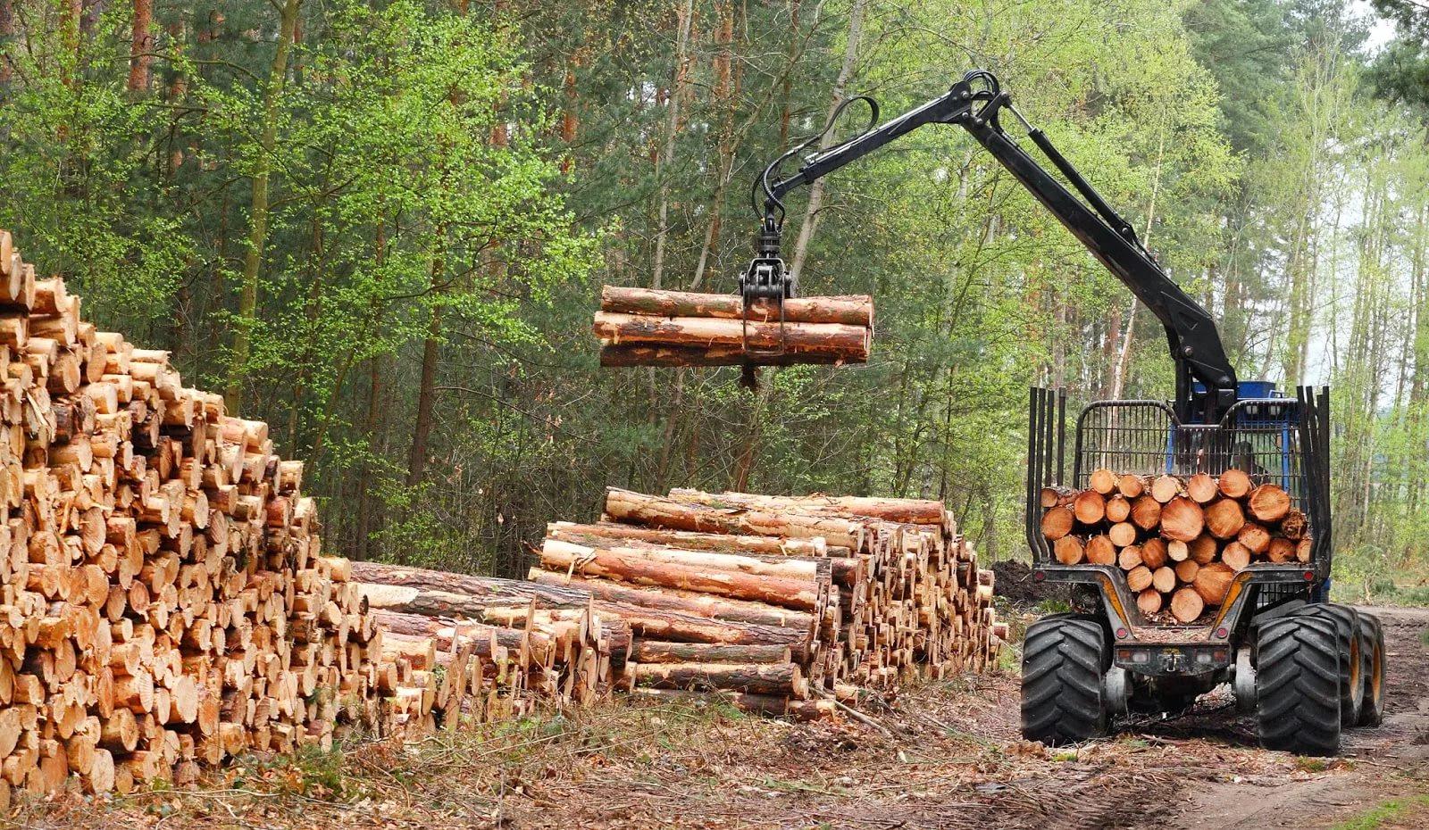 сбор древесины в лесу
