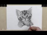 Как нарисовать кота карандашом - подробный обучающий урок