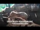 В Индии пять часов спасали слона из грязевой ловушки