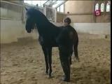Невзоров - Никогда не сяду на лошадь