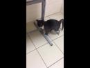 Милый и ласковый котенок