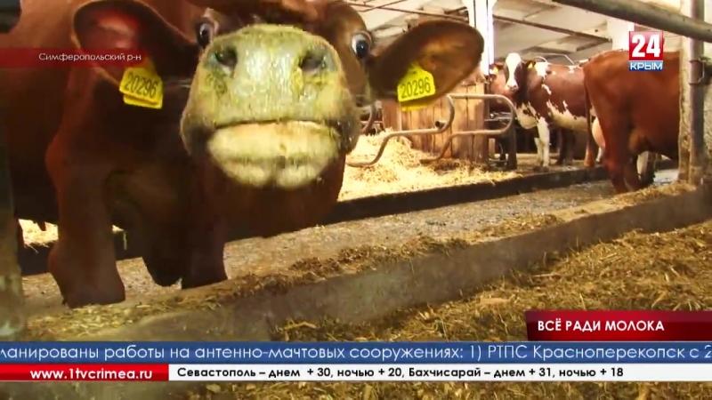 Коровник с кондиционером и комбайны с компьютером у руля агропредприятие в Журавлёвке показало как тратит госдотацию Коровник