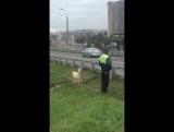 ДПС и козёл