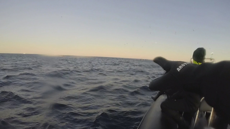 Snorkeling with orcas in Norwegian sea