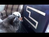 Кот испугался компьютерной игры. Супер смешной прикол