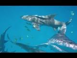 Акула, съевшая видеокамеру, быстро разочаровалась и выплюнула добычу — Смешные, курьезные и странные новости со всего мира