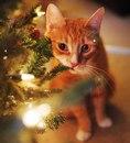Скоро настанет время, когда кот будет разносить по квартире не только шерсть…