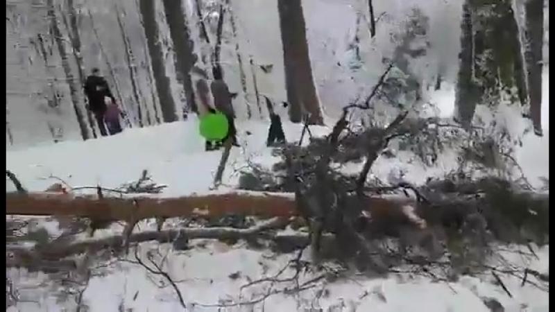 Упало дерево на глазах у людей в Сосновой роще в Калуге