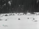 «Ноктюрн» (1966) - военная драма, реж. Ростислав Горяев