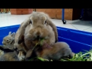 Ириска и крольчата