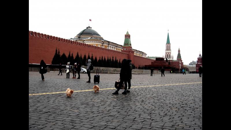 Москва=шпицы моя слабость)2017 (видео-ПИБ)