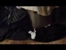 Кот лижет грязную одежду, бельё
