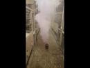 Проведение дезинфекции курятника в домашних условиях и л ечения Однохлористым Йодом ВЫТЕГРА ВОЛОГОДСКАЯ ОБЛОСТЬ