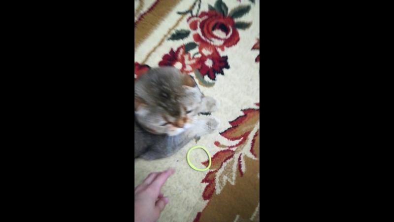 Кот за резинкой. 🐱🐈👍