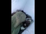 Суровый якутский ребенок ест мороженое на улице в -45 В Северной Якутии отец заснял на видео, как его сын в -45ºC лежит в одной