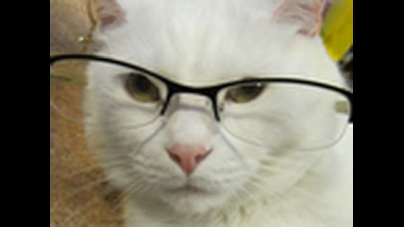 Ask Jupiter - Talking Cat Answers Your Questions