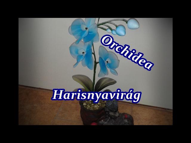 Orchidea harisnyavirág, Nylon flower Orchid