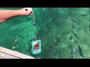 Fish Filmed Underwater with OverBoard Waterproof Phone Case – 100% Waterproof Cases – Phone Cases