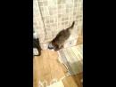 Кот и кефир