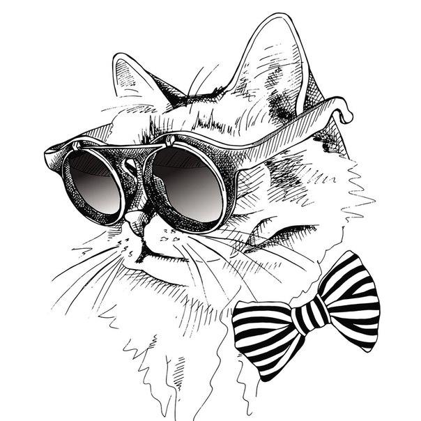 картинки крутого кота рисунки много километров