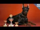 Собаки-чемпионы на выставке в Москве