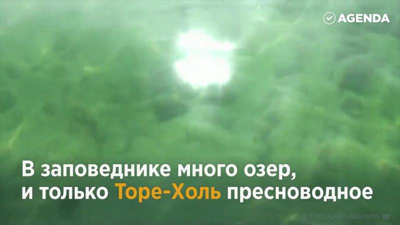 Весь мир в одном уголке России! Убсунурская котловина и Респулика Тува удивляют заповедной красотой и необычными жителями
