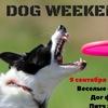 Dog WEEKEND | Пенза