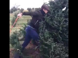 Съездили за елкой