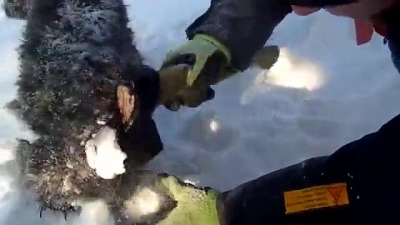 Ямальские вахтовики спасли щенка