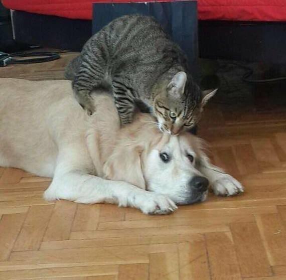 Кошки и прочие забавные животные  - Страница 7 MUbpgkshnkY