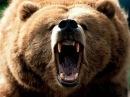 Животный мир. Медвежья жизнь. Татры Словакии. Звериные тропы. Реальный образ. Нюх