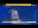 Новости на Россия 24 Сезон Директор Приморского океанариума ушел в отставку после смерти дельфина