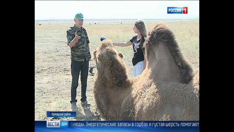 Дон-ТР об Ассоциации Живая природа степи