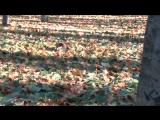 Беличьи нычки на зиму-3