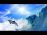 Дельфины Dj Slon s Ангел А