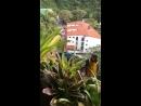 В Каракасе Венесуэла Попугаи летают свободно по всему городу