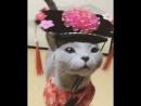 Кот зажиточный сёгун