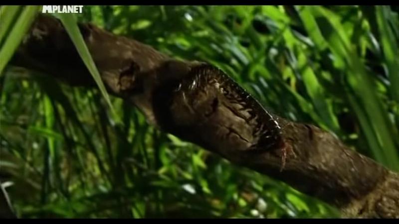Войны жуков-гигантов / Monster bug wars 06