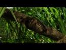 Войны жуков гигантов Monster bug wars 06