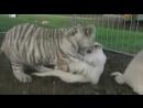 Animal Planet. Человек и львы 1-3 сезоны 1-43 серии из 43 / The Lion Man / 2004-2008 /37