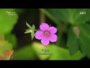 Зеленые создания 1 серия Размножение