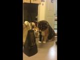 Смешная реакция котов на метроном