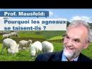 Pourquoi les agneaux se taisent-ils ? Ou : le phénomène des crimes de guerre « invisibles » des États-UnisLes gens dans leur gra