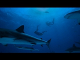 GoPro: Freediving with Tiger Sharks