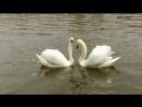 Танец белых Лебедей под Гусли ...